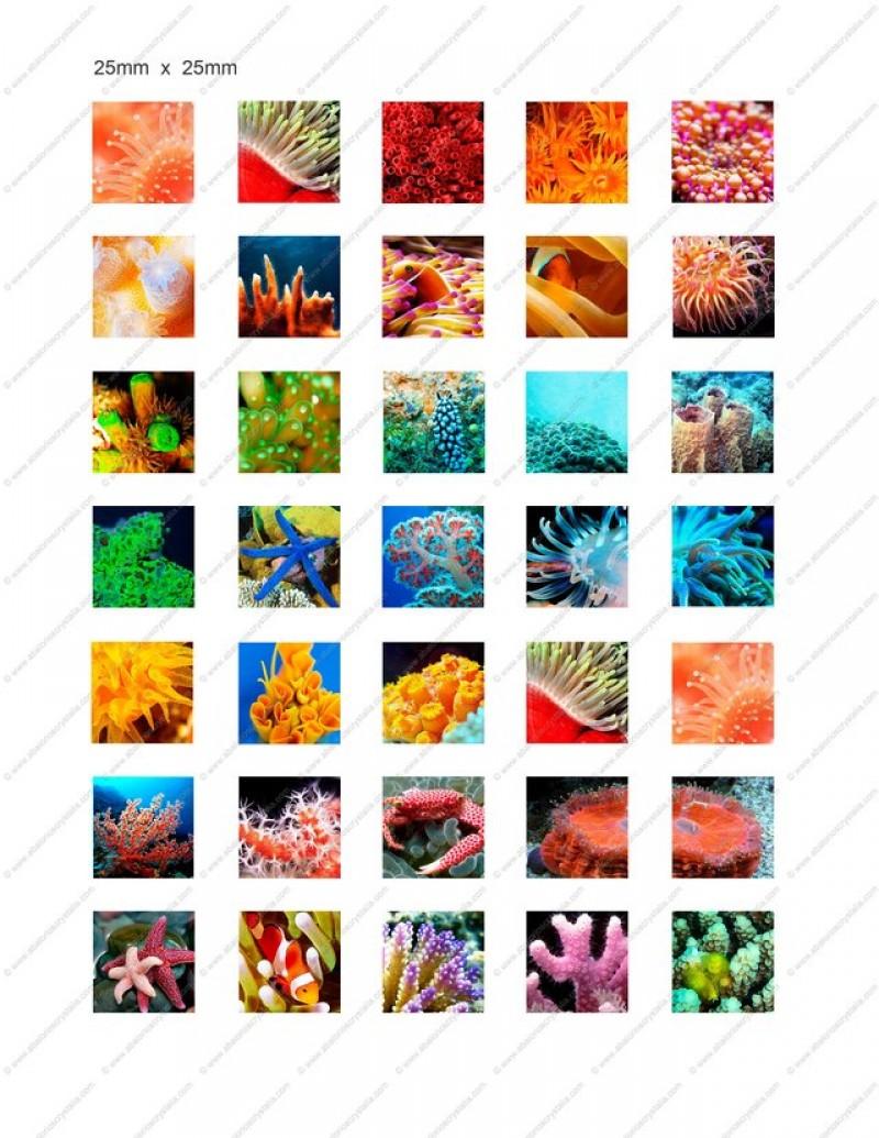 LÁMINA CON 35 IMÁGENES 25x25mm Coral