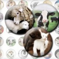 LÁMINA FOTOGRÁFICA CON 42 IMÁGENES 25x25mm Animales