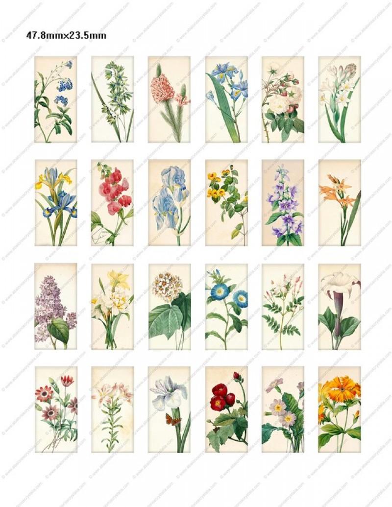 LÁMINA FOTOGRÁFICA CON 24 IMÁGENES 47.8x23.5mm Floral