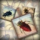 LÁMINA CON 30 IMÁGENES 25x25mm Insectos
