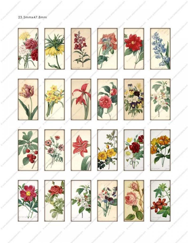 LÁMINA FOTOGRÁFICA CON 24 IMÁGENES 47.8x23.5mm Floral 2