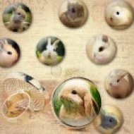 LÁMINA FOTOGRÁFICA CON 30 IMÁGENES 25x25mm Conejo