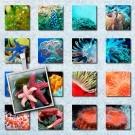 LÁMINA FOTOGRÁFICA CON 35 IMÁGENES 25x25mm Coral