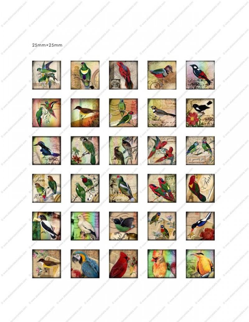 LÁMINA CON 30 IMÁGENES 25x25mm Aves 2