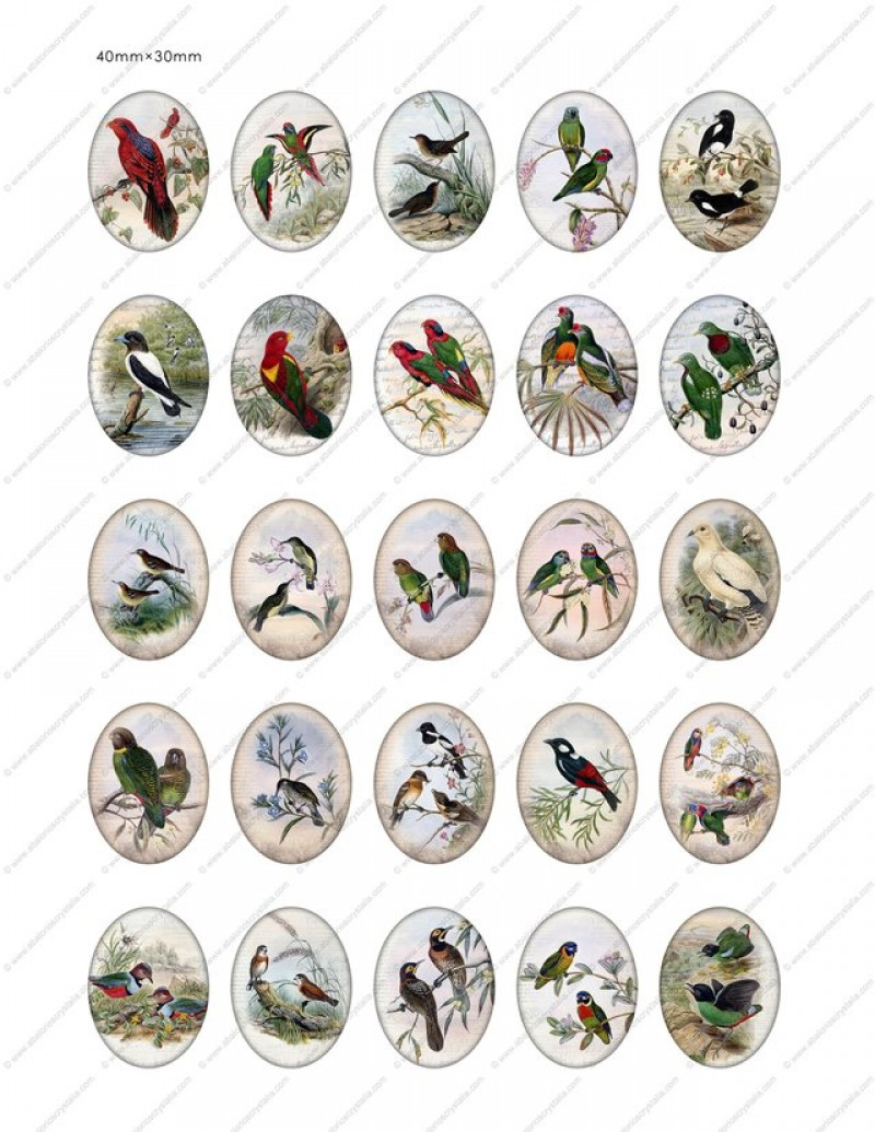 LÁMINA FOTOGRÁFICA CON 25 IMÁGENES 40x30mm Pájaros