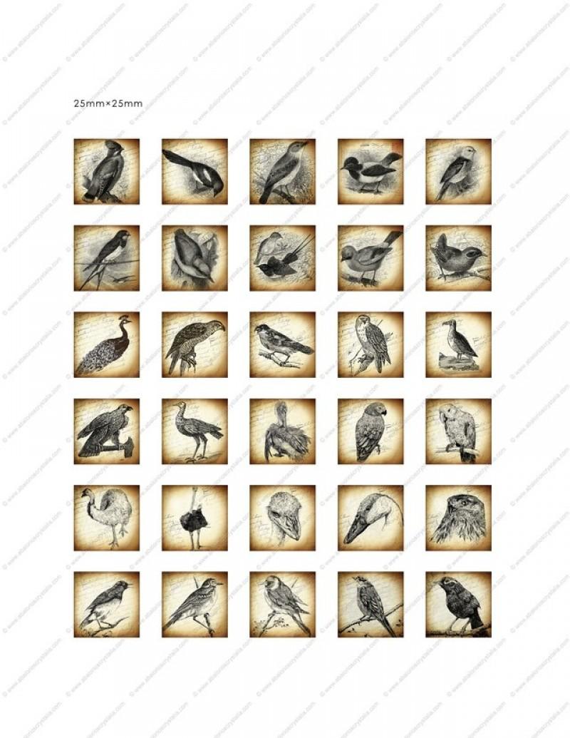 LÁMINA CON 30 IMÁGENES 25x25mm Aves